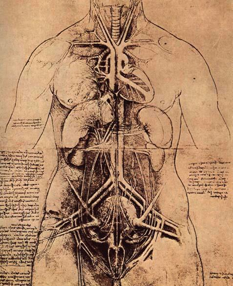 The Body Is Not A Machine Center For Evolution And Medicine